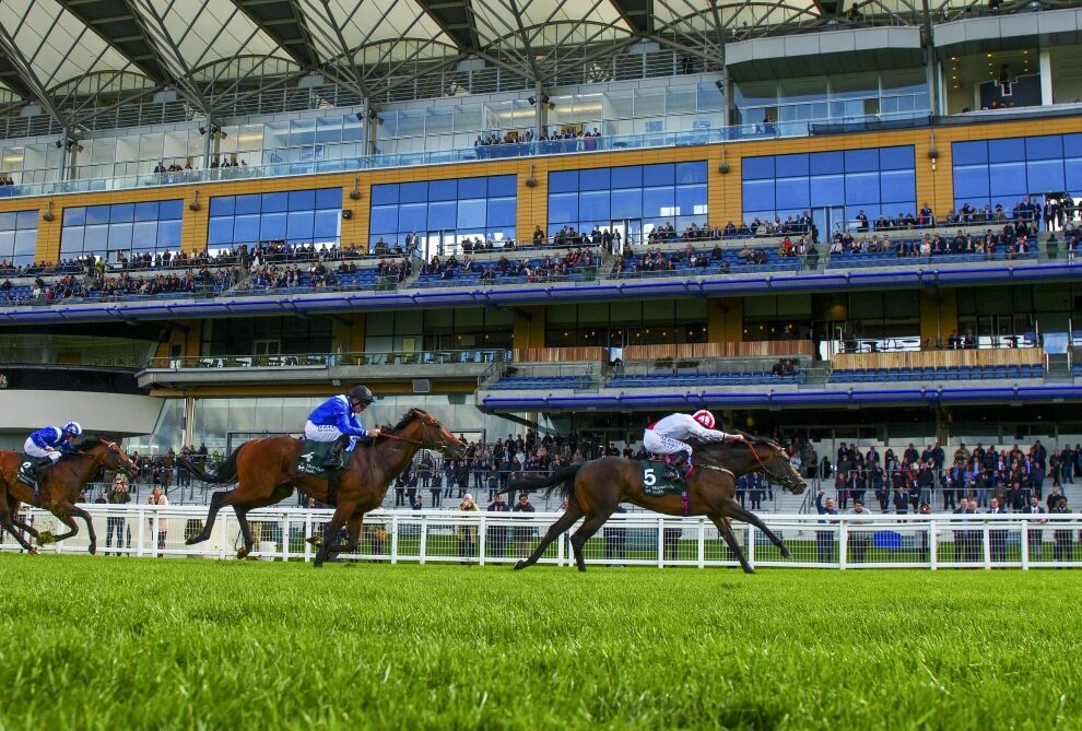 First Foal for Multible Group Winning Sprinter Invincible Army