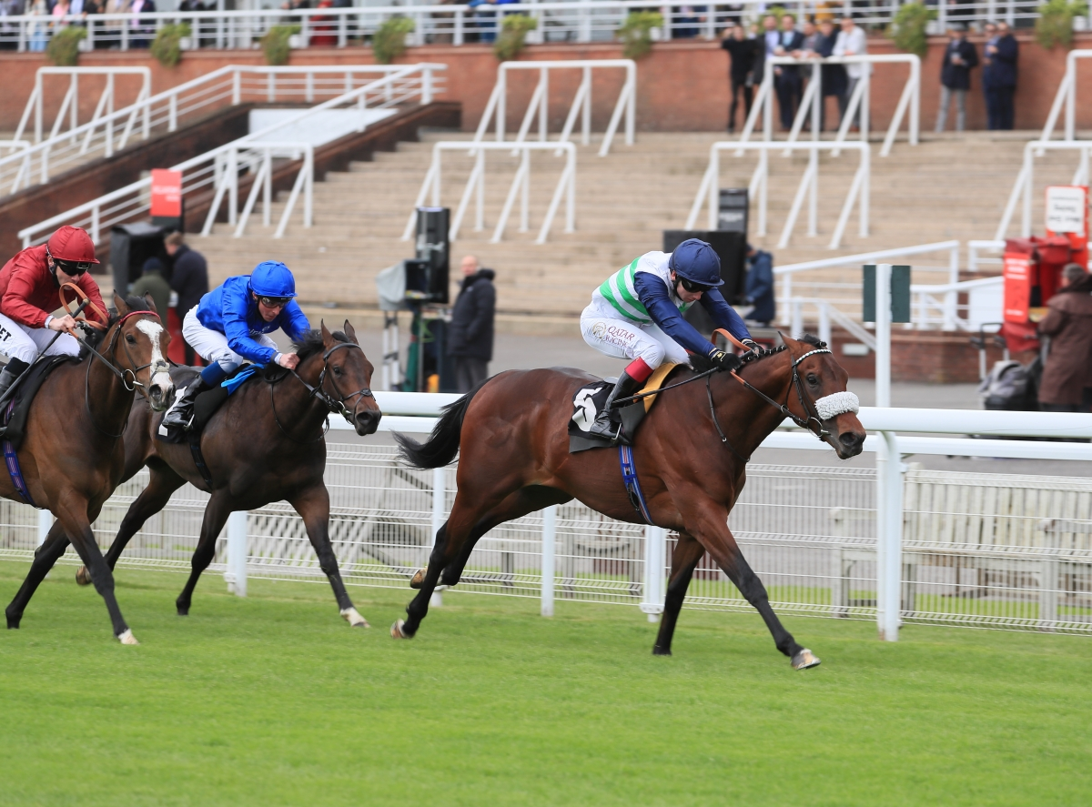 Three Winners from Seven Runners For Freshman Sire El Kabeir